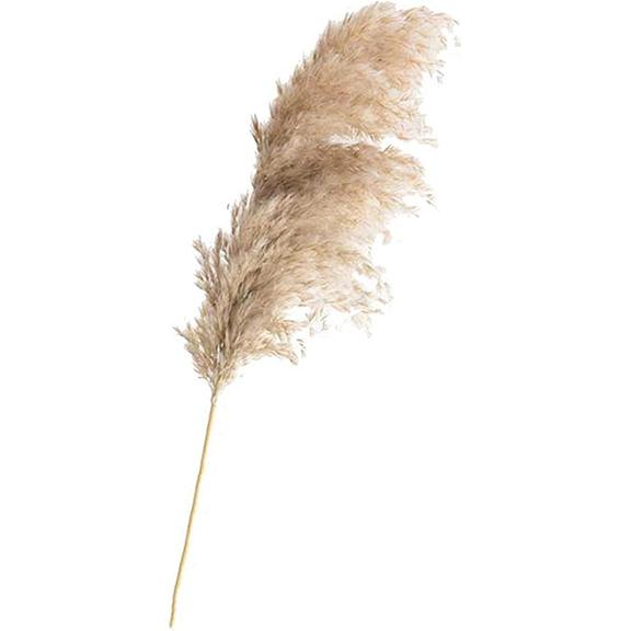 20 Piece Bundle Natural Long Stem Dried Pampas Grass L5ft