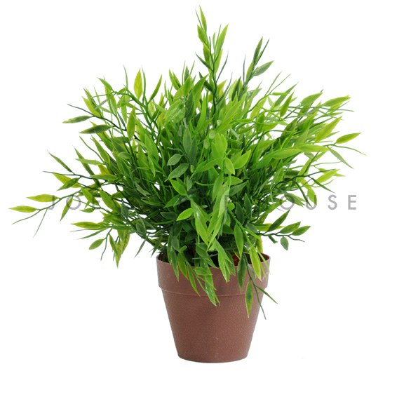 Potted Greenery