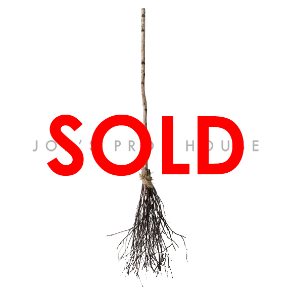 BUY ME / USED ITEM $39.99 each  Witches Broomstick