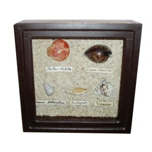 Square Assorted Shell Shadow Box